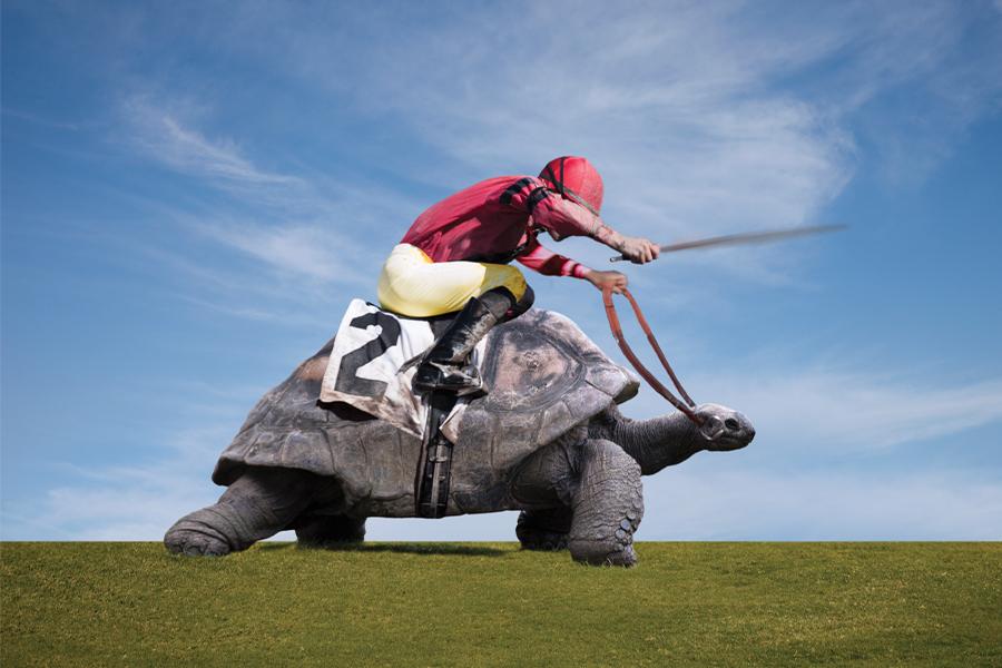 jockey rides giant turtle