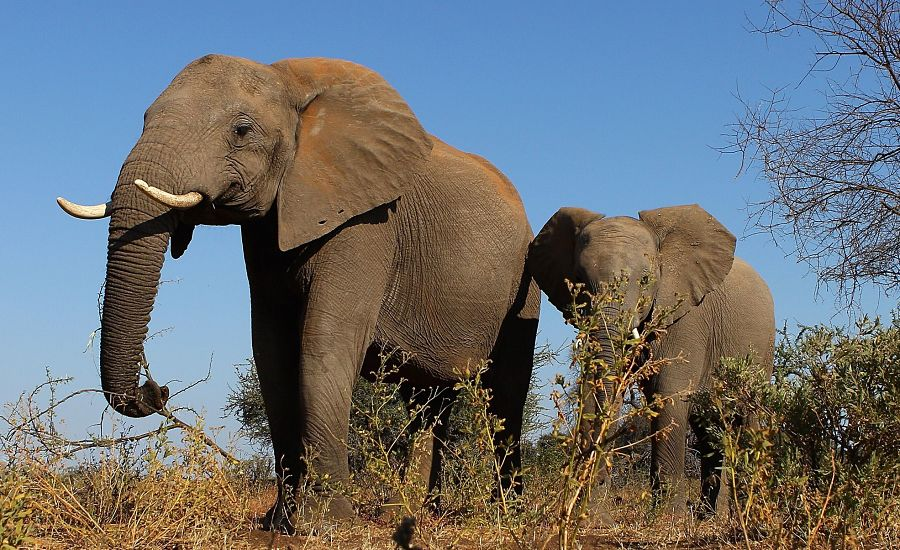 Three blind wealth management execs and the demographic elephant