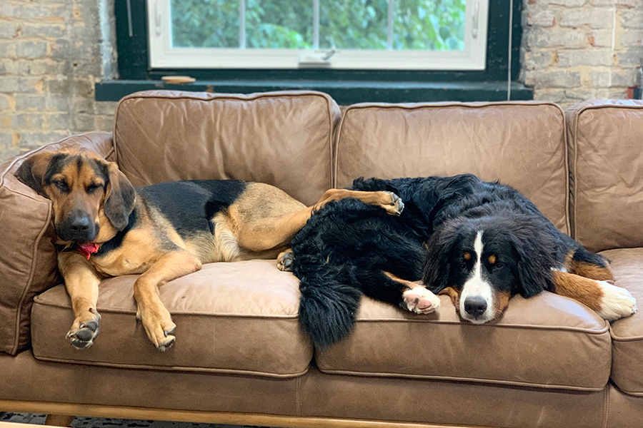 Working canine to 5: Dogs in office help reduce stress